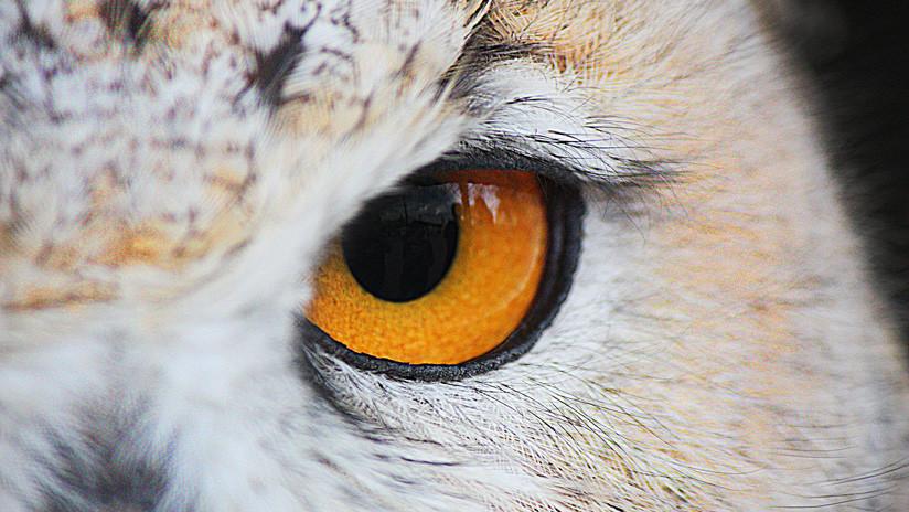 Científicos crean una cámara que permite reproducir la visión de las aves (FOTO)