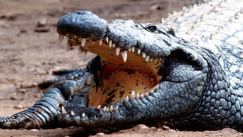 Un hombre muerde a un cocodrilo para rescatar a su hijo