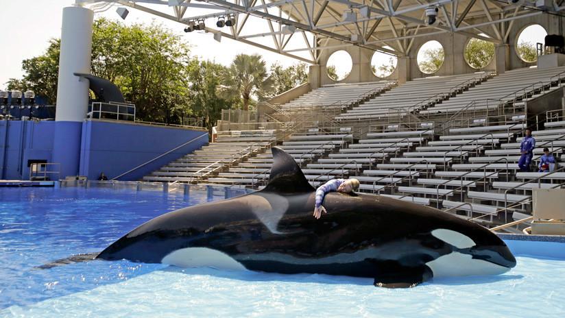 La extraña muerte de la orca Kayla indigna a los conservacionistas en EE.UU.