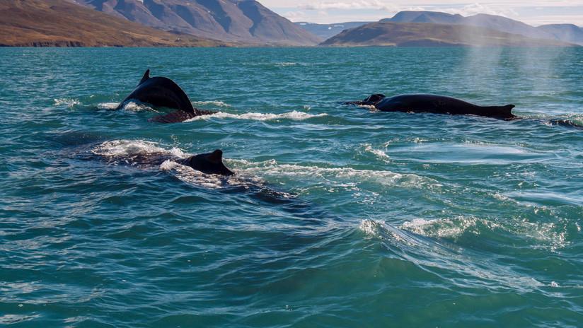 Sonares militares podrían ser la causa de varamientos masivos de ballenas