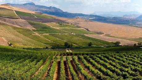 Cultivos en los alrededores de Sambuca di Sicilia.