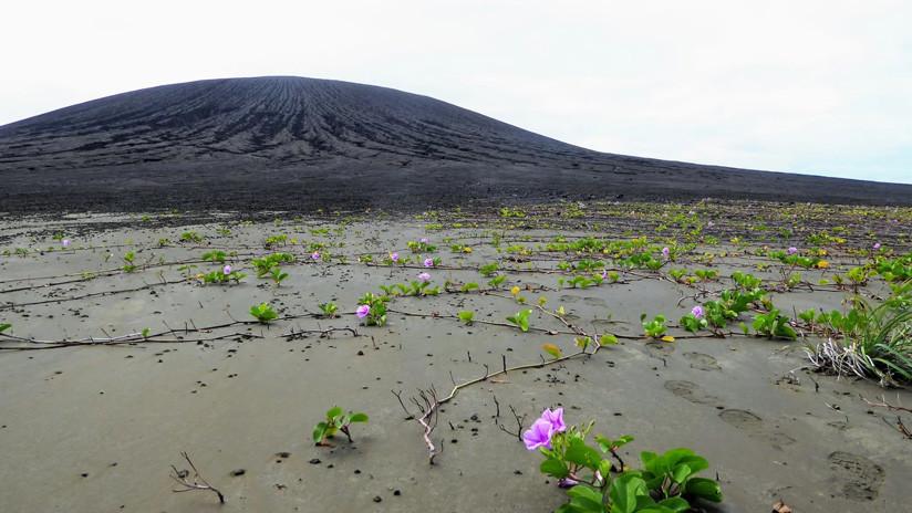 FOTOS: Así es la nueva isla del Pacífico que se resiste a desaparecer