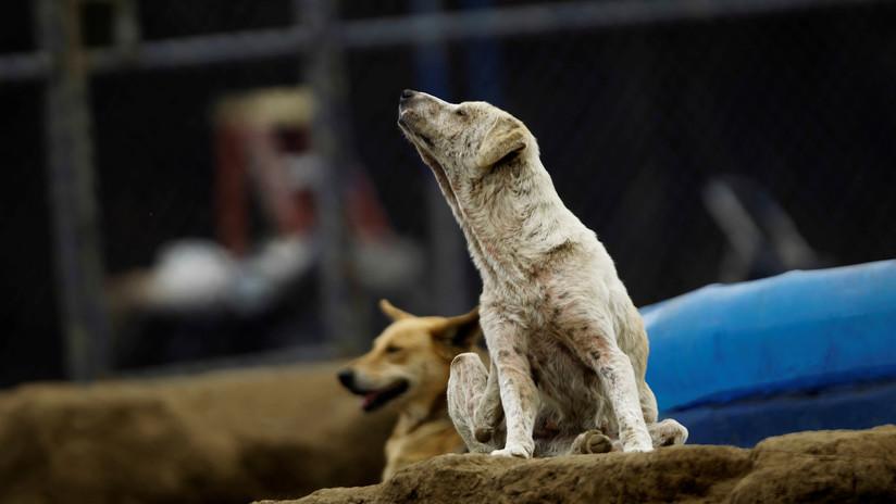 Una jauría de perros ataca y mata a una mujer en México