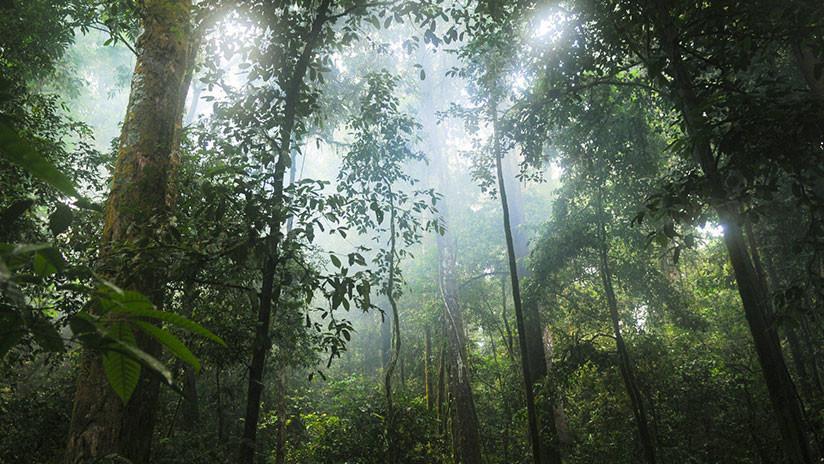 VIDEO: Cámara oculta capta la 'diversidad de la vida' en un simple tronco caído en un bosque francés