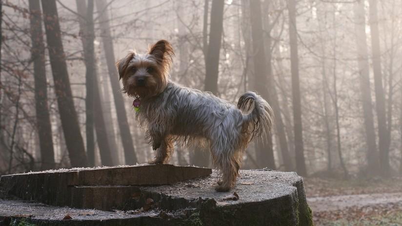 Un perro salva a su dueño de 81 años que cayó en un barranco en España