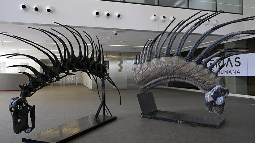 Hallan en Argentina una nueva especie de dinosaurio que se defendía con afiladas espinas en su cuello (FOTOS)