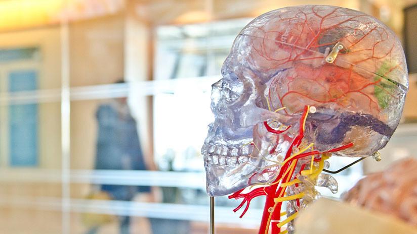 Comprobado: El cerebro de las mujeres es siempre tres años más 'joven' que el de los hombres