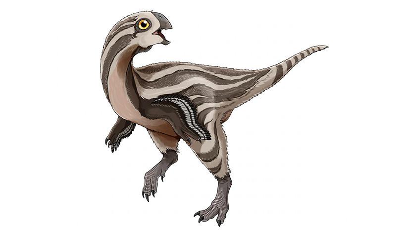 Descubren una nueva especie de dinosaurio sin dientes, que se alimentaba de huevos
