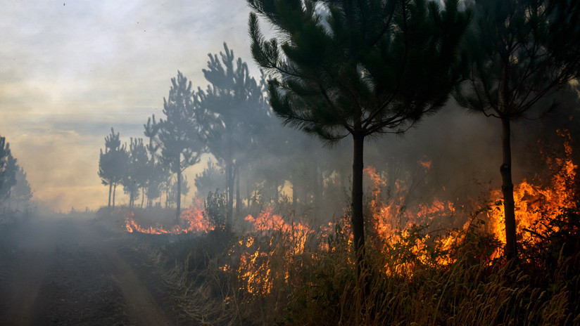 """Ministerio del Medio Ambiente de Chile: """"Las consecuencias de los incendios son devastadoras"""""""