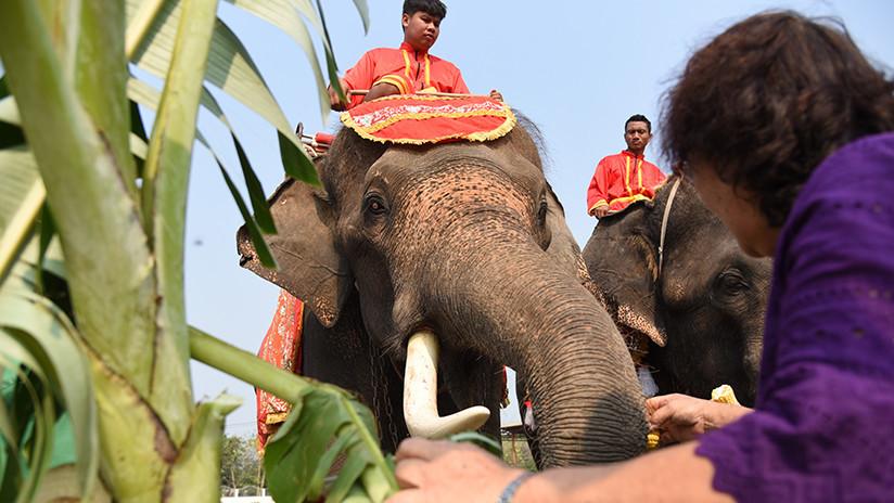 'Le tocaron las narices': Una joven se abraza a la trompa de un elefante y se desata el caos (VIDEO)