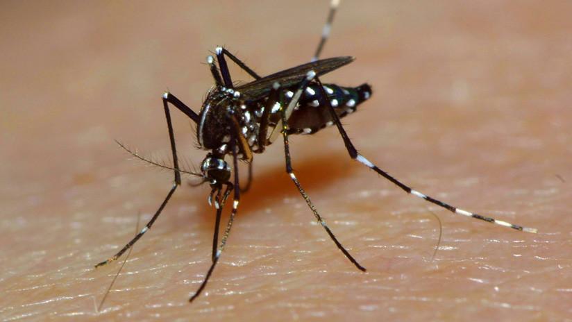 Científicos rebajan el apetito a los mosquitos más 'enganchados' a la sangre humana