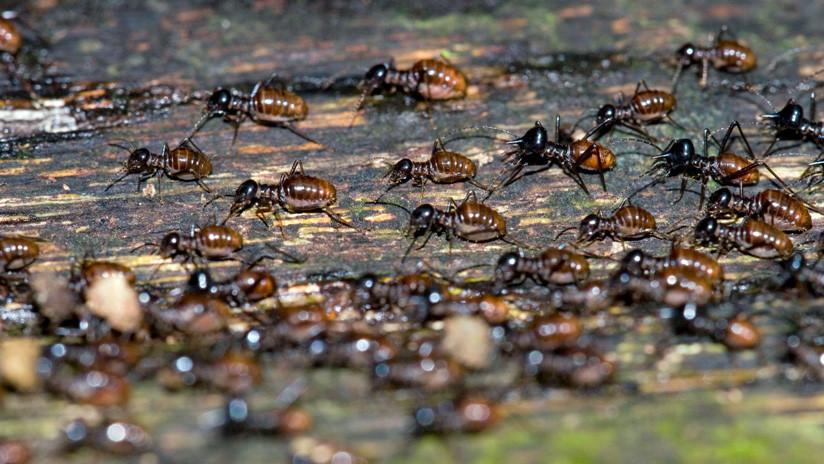 El colapso natural por venir: Los insectos están en peligro de extinción