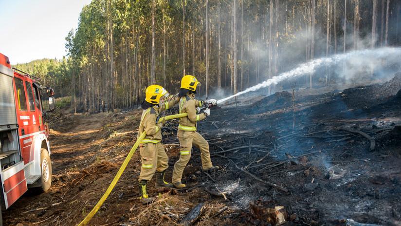 Incendios forestales en Chile afectan 53 mil hectáreas