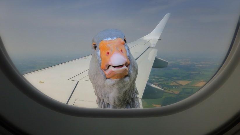 Nuevo reto viral: Crear la ilusión óptica de un viaje en avión mediante los objetos más inesperados (VIDEO)