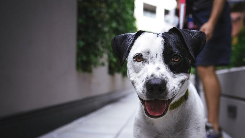 """Residentes de una localidad francesa podrán ser multados por el ladrido """"insoportable"""" de sus perros"""