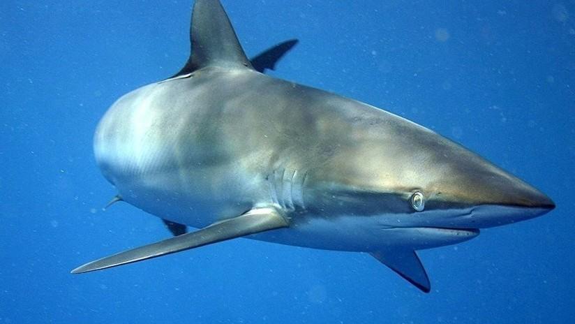 """""""Aprendí bien la lección"""": Un tiburón muerde a un surfista en la cabeza por imprudente"""