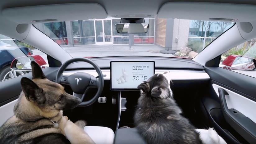 Tesla presenta el 'modo perro': ¿para qué sirve? (VIDEO)