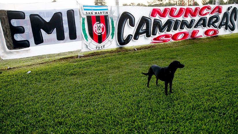 Fiel hasta la muerte: La perra de Emiliano Sala acudió a su funeral para darle el último adiós (FOTO)