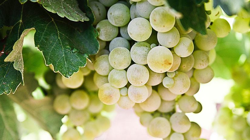 Los físicos descubren por qué las uvas se 'encienden' en el microondas (VIDEO)