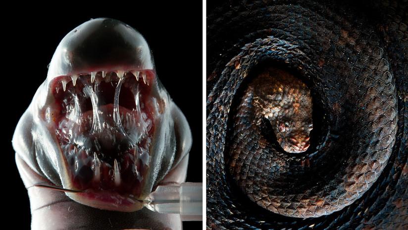 El 'Top 10' de reptiles y anfibios más extraños de Ecuador (FOTOS)
