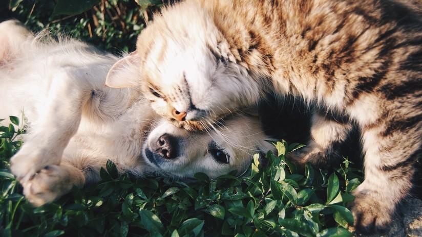 Una gata sigue visitando la casa de su 'amiga', una perra que murió de cáncer hace más de un año