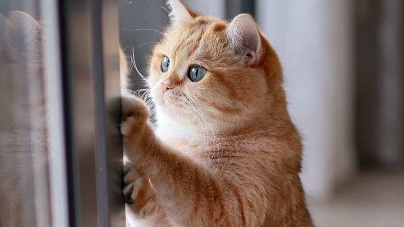 Cámara oculta: Se viraliza la hábil maniobra de un gato para escapar de un baño