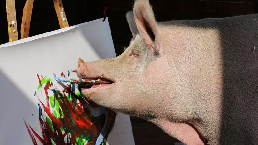 De Picasso a Pigcasso: El arte animal en una marea de colores