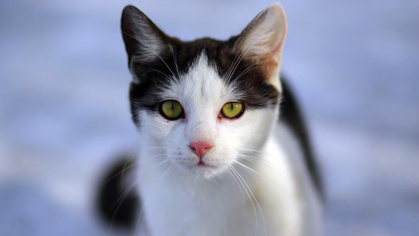 Una asombrosa serie de imágenes muestra cómo una gata negra se vuelve completamente blanca