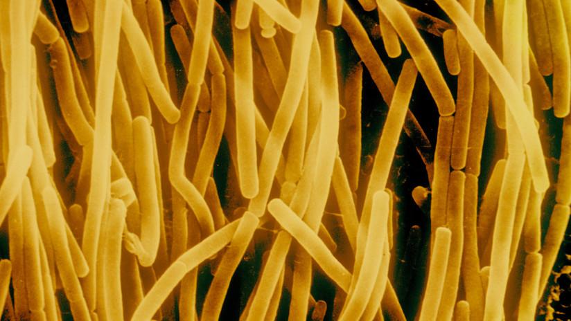 Estado zombi: identifican estrategia desconocida de supervivencia de las bacterias