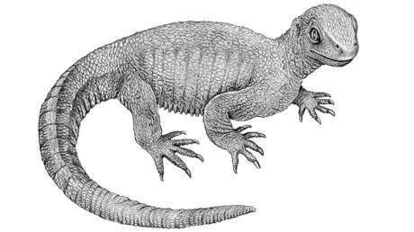 Una representación artística del Pappochelys rosinae.