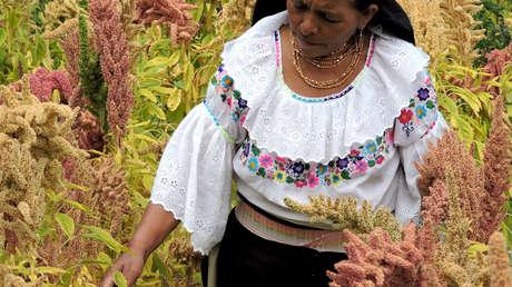 Mujer cosechando amaranto.
