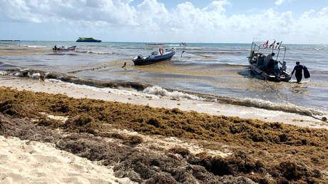 Sargazo en una playa de la ciudad Playa del Carmen, Quintana Roo, México.