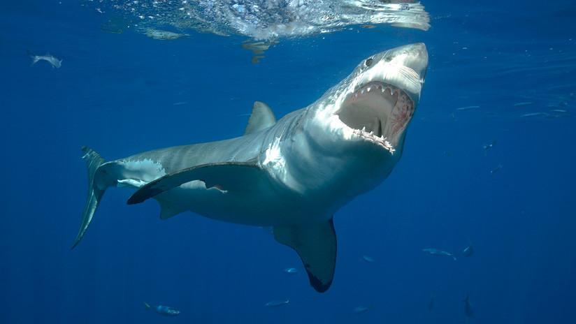 Análisis estadístico global señala un aumento de los ataques de tiburones a humanos