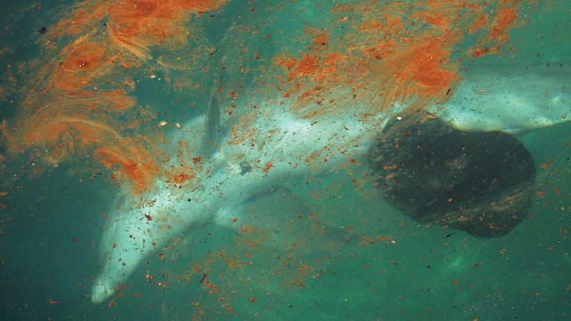 Científicos dicen que es probable que no quede ni un solo ecosistema marino que no se vea afectado por la contaminación