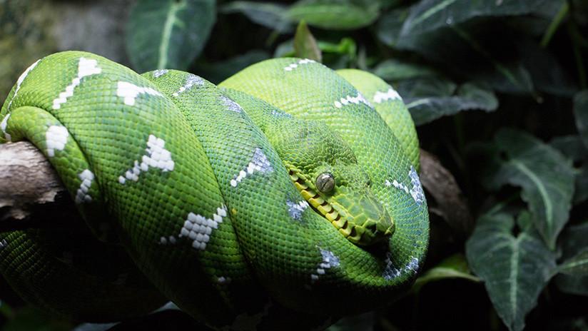 """Descubren que las especies exóticas son la """"principal causa"""" de las extinciones globales"""