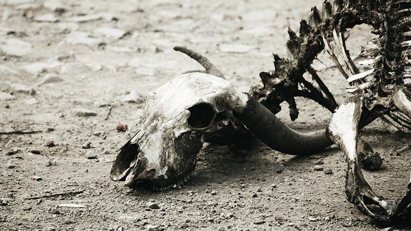 Huesos fosilizados digeridos por cocodrilos revelan la existencia de mamíferos desconocidos