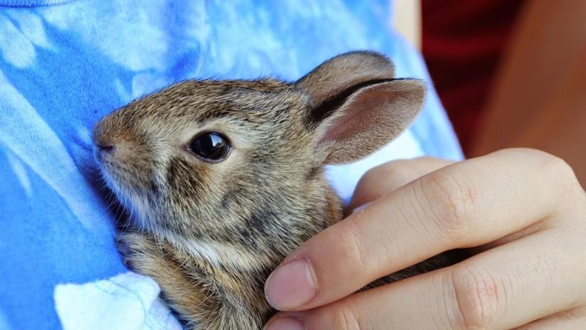 Varitas mágicas: Cómo los aplicadores de rímel usados ayudan a conejos huérfanos y otros animales