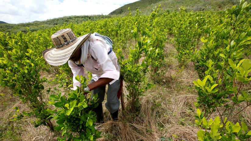 El dilema del glifosato en Colombia: Fumigación inmediata de cultivos ilícitos o evitar riesgos medioambientales