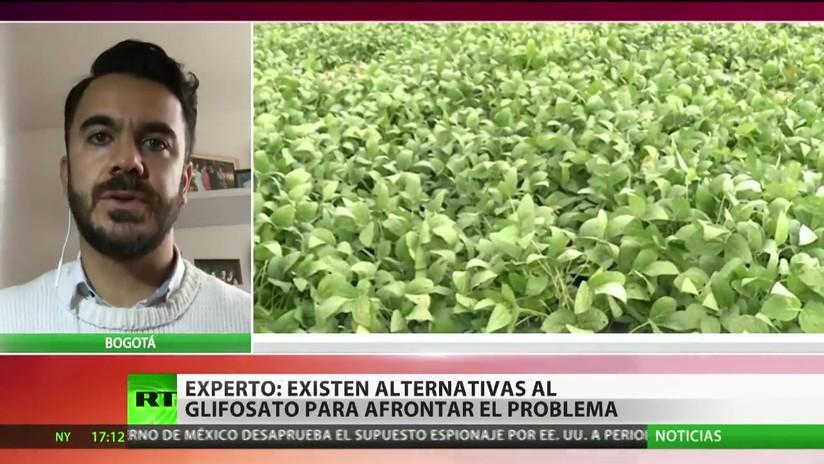 Debaten volver a utilizar el dañino glifosato contra cultivos de coca en Colombia