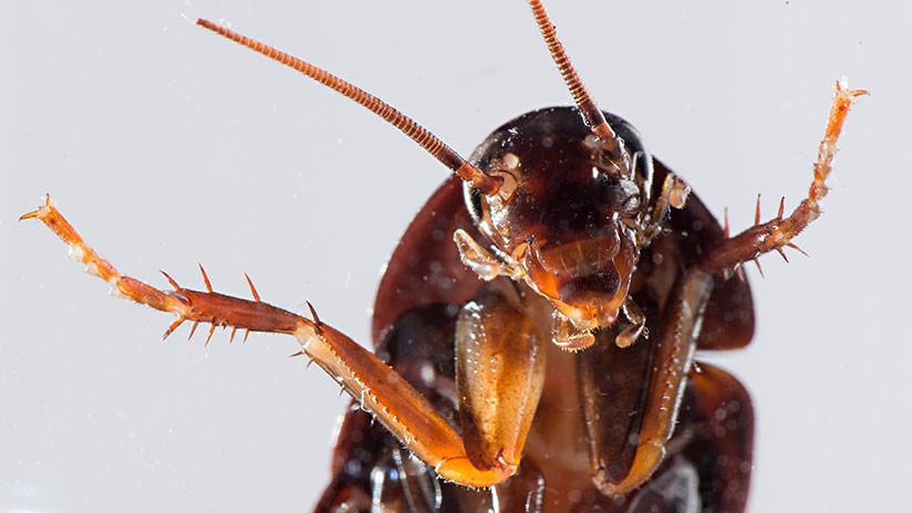 VIDEO: Hallan más de 40 cucarachas muertas en un pedido de comida a un restaurante en China