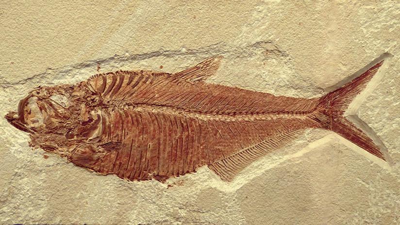 Hallan en los Alpes fósiles de peces desconocidos