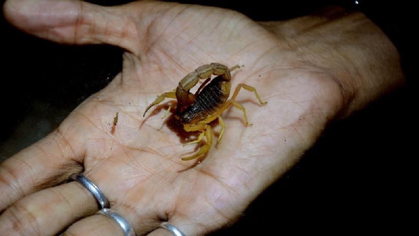 Una joven estudiante es picada por un escorpión en pleno vuelo