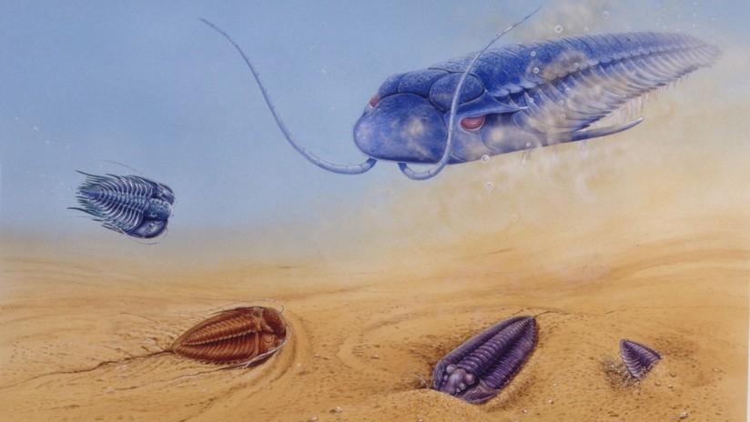 Determinan cuándo empezó la diversidad animal en la Tierra