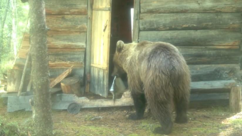 VIDEO: Un oso 'allana' una cabaña de guardabosques en la taiga siberiana y sale con un periódico