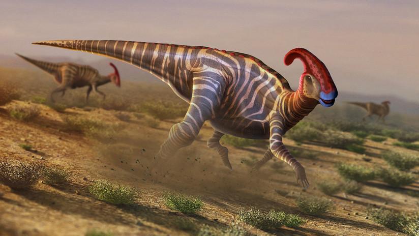 Descubren un nuevo dinosaurio en Australia