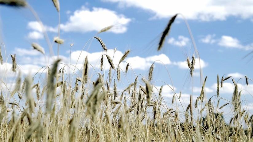 Científicos descubren cómo la agricultura cambió para siempre nuestra manera de hablar