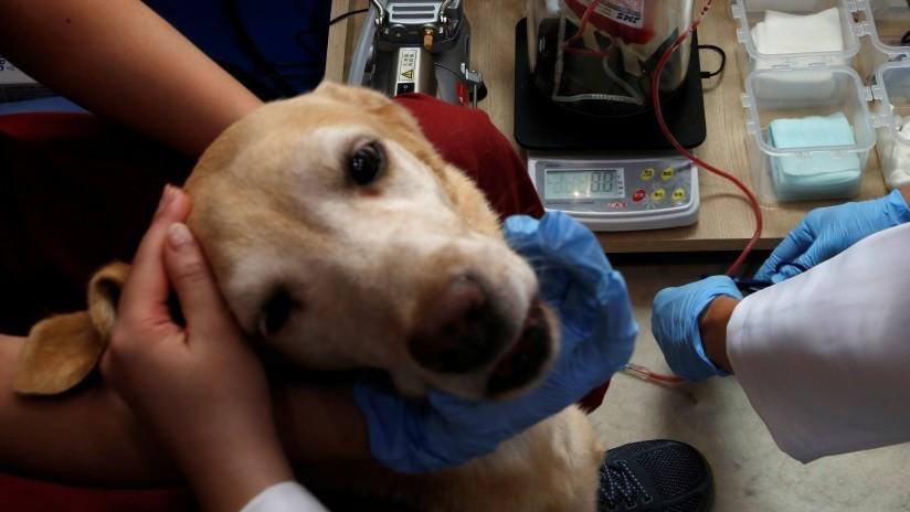 Perro argentino espera fuera del hospital el regreso de su dueño muerto