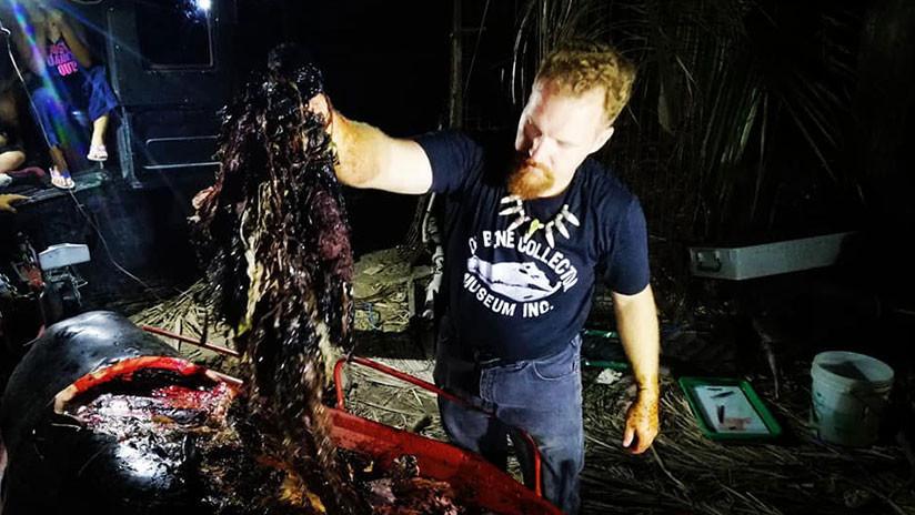 Encuentran una ballena muerta con 40 kilos de plástico en su estómago (VIDEO)
