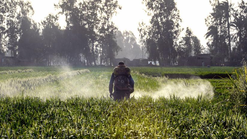 La fresa encabeza la lista de cultivos con más pesticidas
