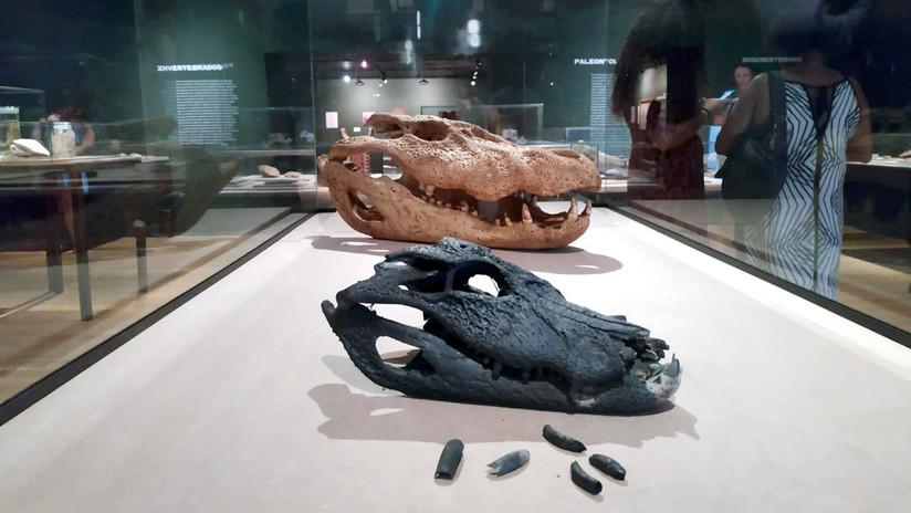 Un meteorito de 1922 o un mamífero del Pleistoceno: El Museo Nacional de Brasil expone las piezas rescatadas del incendio